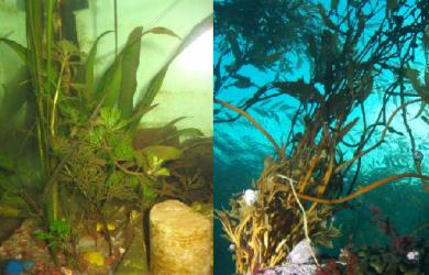 algen-aquarium